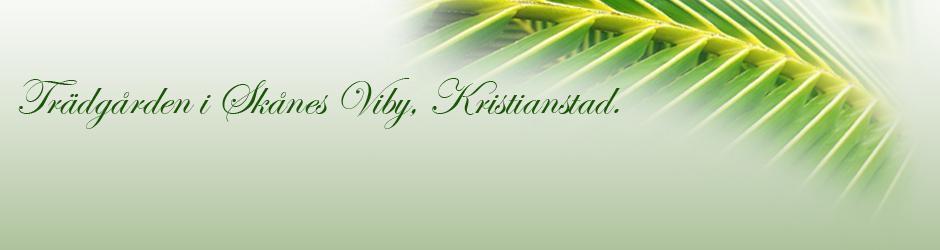 Trädgården i Skånes Viby, Kristianstad